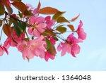 closeup on blooming apple tree... | Shutterstock . vector #1364048