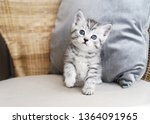 Stock photo funny striped kitten cute kitten 1364091965