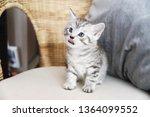 Stock photo the kitten is licked hungry kitten 1364099552