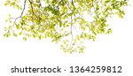 tree branch isolated   tree... | Shutterstock . vector #1364259812