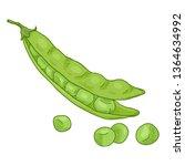 vector single cartoon green... | Shutterstock .eps vector #1364634992