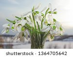 white snowdrops in a vase on a... | Shutterstock . vector #1364705642