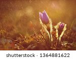 spring background with flowers...   Shutterstock . vector #1364881622