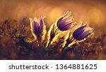 spring background with flowers...   Shutterstock . vector #1364881625