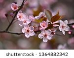 springtime. beautiful flowering ...   Shutterstock . vector #1364882342