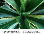 top view of macro tropical... | Shutterstock . vector #1365272468