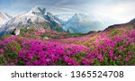 Small photo of The sharp Alpine peaks of Mont Blanc with snow and glaciers soar above the spring meadows, where rhododendrons bloom - delicate fragrant spring flowers
