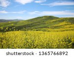 super bloom. southern... | Shutterstock . vector #1365766892