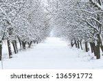 Snow Covered Fruit Garden