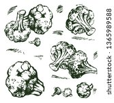vector sketches of cabbage... | Shutterstock .eps vector #1365989588