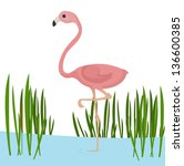 Cute Flamingo