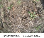 forest glade with needles.   Shutterstock . vector #1366045262