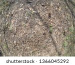 forest glade with needles.   Shutterstock . vector #1366045292