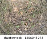 forest glade with needles.   Shutterstock . vector #1366045295
