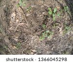 forest glade with needles.   Shutterstock . vector #1366045298
