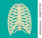 illustration of human rib cage. ...   Shutterstock .eps vector #1366073765