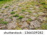 grass and weeds grow in the... | Shutterstock . vector #1366109282