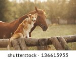 Red border collie dog and horse ...