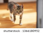 close up portrait of a kitten... | Shutterstock . vector #1366180952
