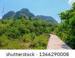 Nature\'s Walking Foot Path...