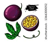 passion fruit vector drawing.... | Shutterstock .eps vector #1366300052