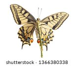 machaon butterfly with open... | Shutterstock . vector #1366380338