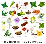 spices and cooking herbs ... | Shutterstock .eps vector #1366499792