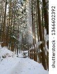 vertical landscape pine trees... | Shutterstock . vector #1366602392