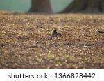 A Cute Fox Squirrel In The...