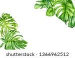 green monstera leaf  tropical...   Shutterstock . vector #1366962512