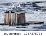 pair of seagulls sitting on the ... | Shutterstock . vector #1367375735