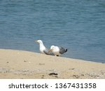 Pair Of Seagulls On The Seashore
