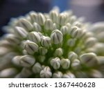 Beautiful White Flower   Image