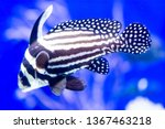 Blurry Photo Of A Spotted Drum...