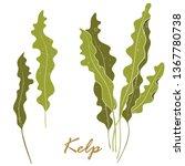 seaweed kelp or laminaria.... | Shutterstock .eps vector #1367780738