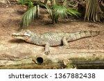 barcelona  spain. broad snouted ...   Shutterstock . vector #1367882438