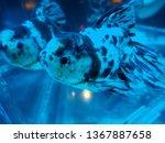 beautiful gold fish   Shutterstock . vector #1367887658