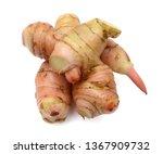 fresh alpinia galanga root... | Shutterstock . vector #1367909732