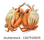 steamed king crab isolated on... | Shutterstock . vector #1367910035