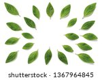 mint leaves  leaves  mint... | Shutterstock . vector #1367964845