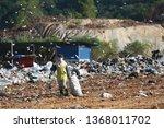 kota kinabalu  sabah  malaysia  ...   Shutterstock . vector #1368011702