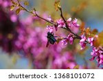 Male And Female Carpenter Bees...