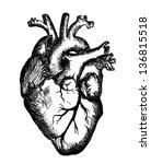 heart drawing on white... | Shutterstock . vector #136815518