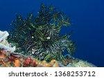 Incredible Underwater World  ...