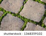 moss  bryophyta   vivid green...   Shutterstock . vector #1368359102