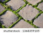 moss  bryophyta   vivid green...   Shutterstock . vector #1368359105