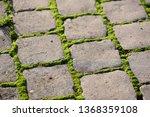 moss  bryophyta   vivid green...   Shutterstock . vector #1368359108