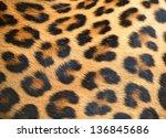 portrait of leopard in its...   Shutterstock . vector #136845686