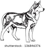 alaska,america,animal,arctic,breed,canada,dog,dog breeds,dog show,husky,icon,illustration,north,north europe,pet