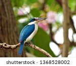 the collared kingfisher on... | Shutterstock . vector #1368528002